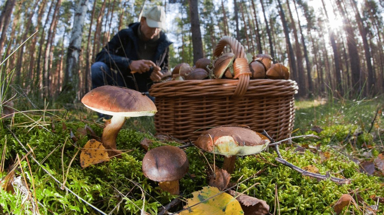 Поход за грибами картинка